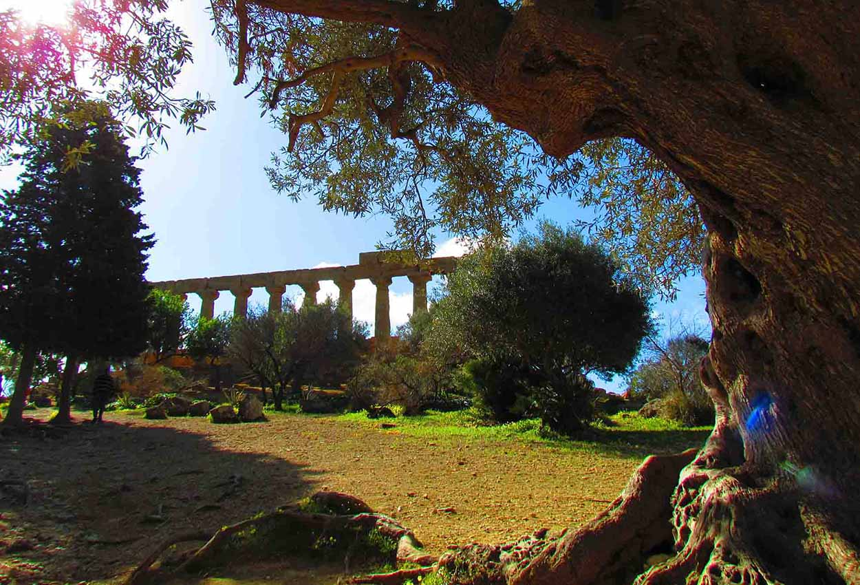 Sicily Tour - Agrigento Temples to Piazza Armerina 4