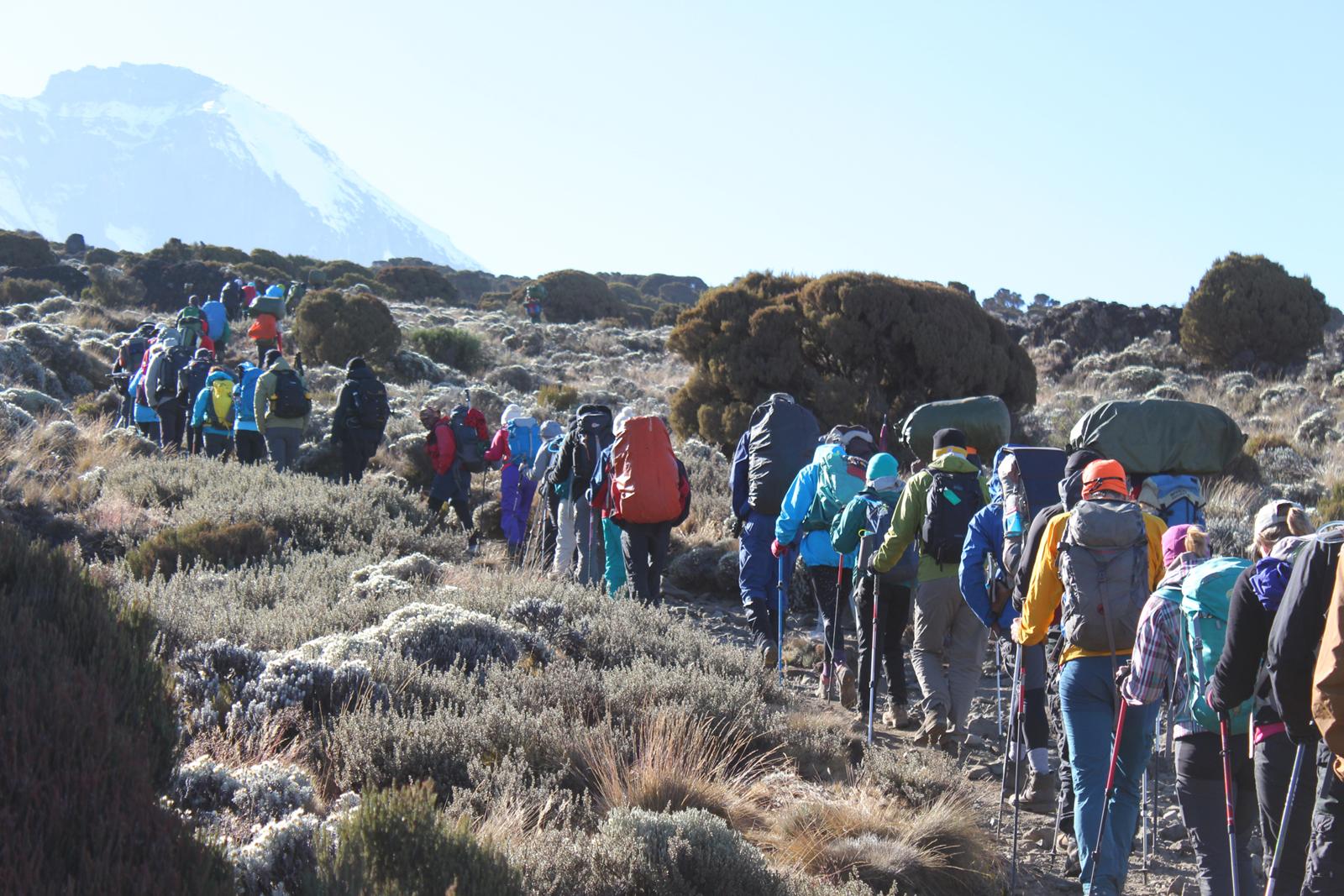 8 Days Mount Kilimanjaro Hiking Tour via Lemosho Route 1