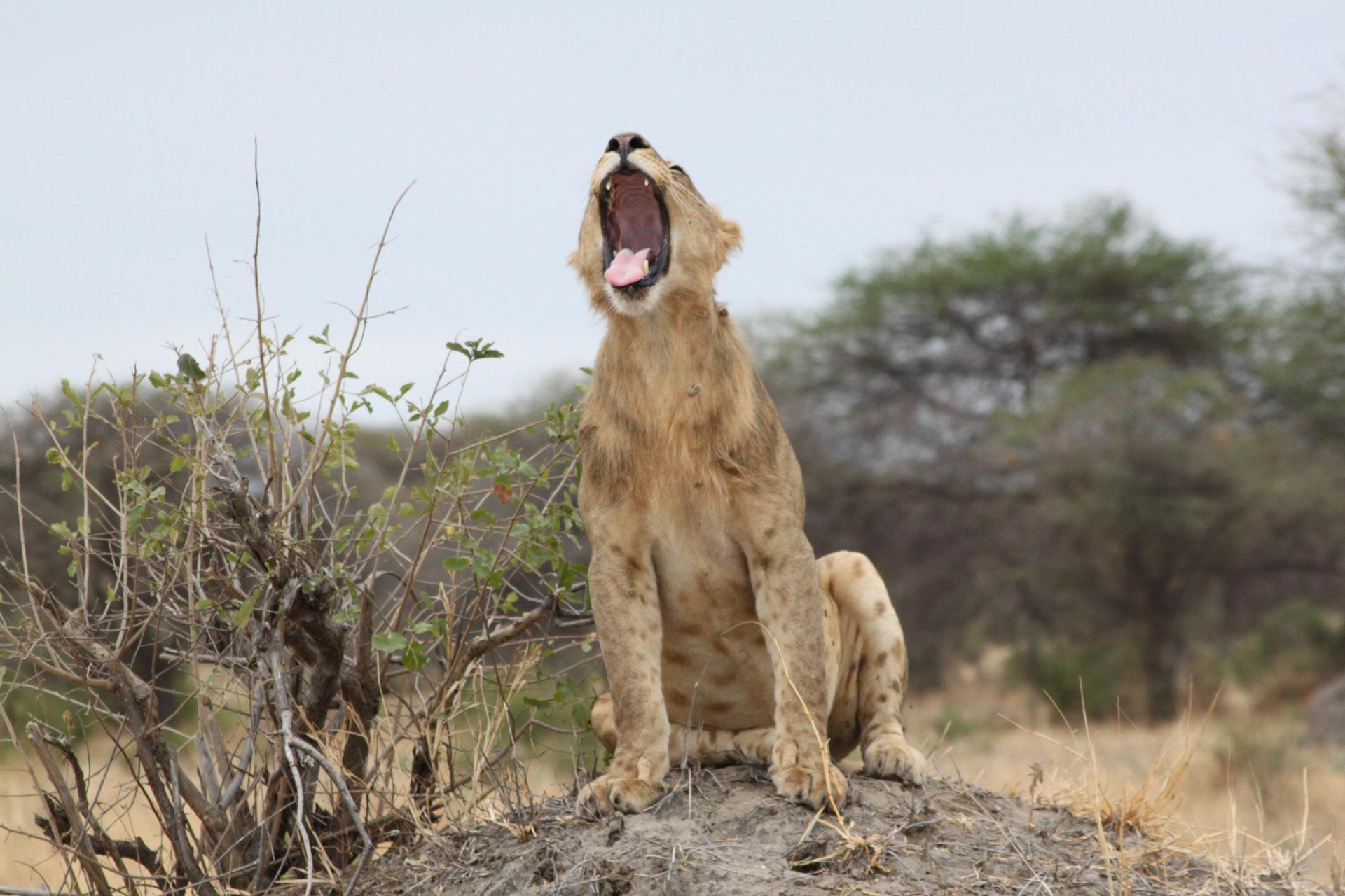 4 Days Private Tanzania Safari 2
