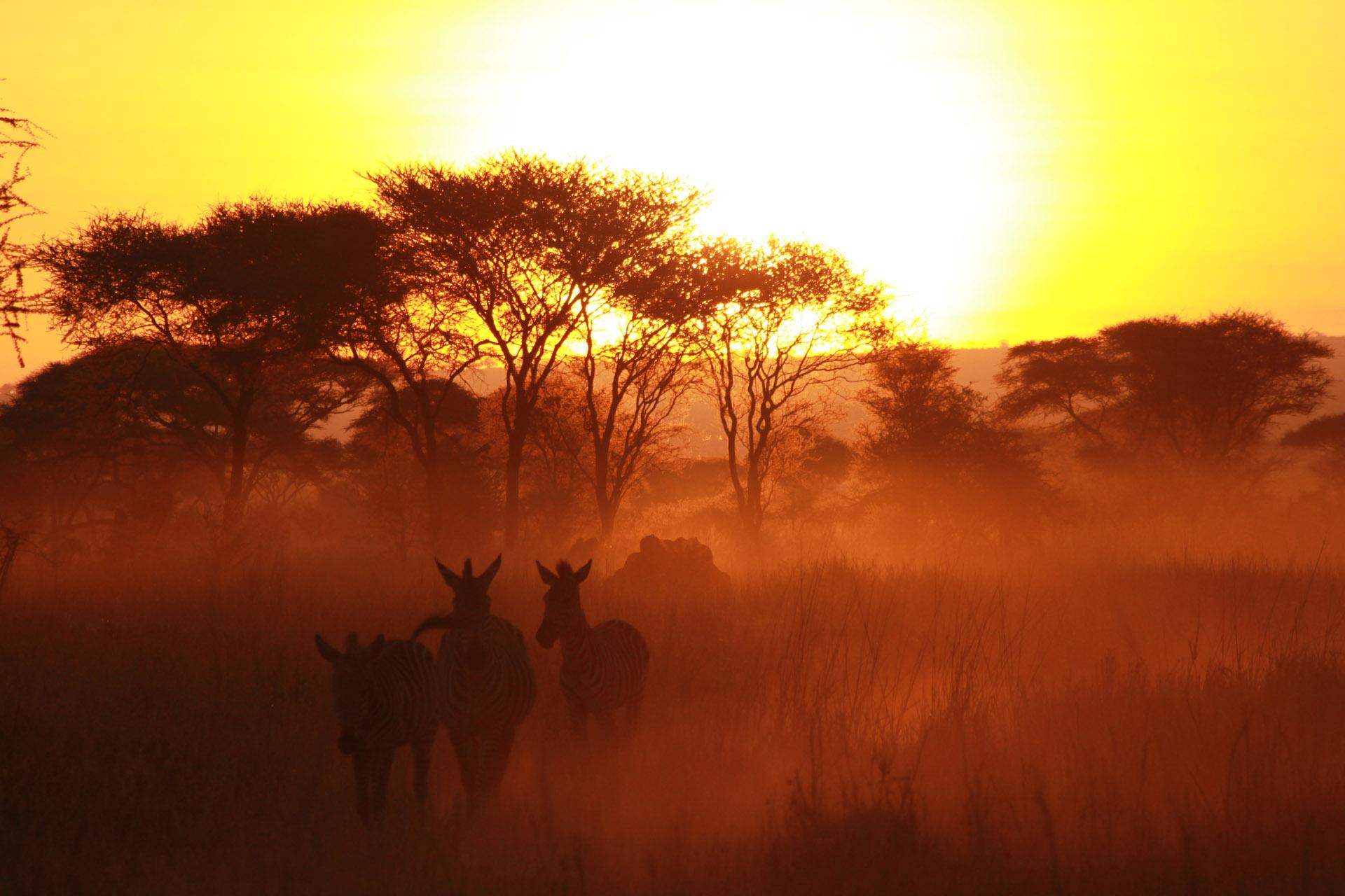 4 Days Private Tanzania Safari 3