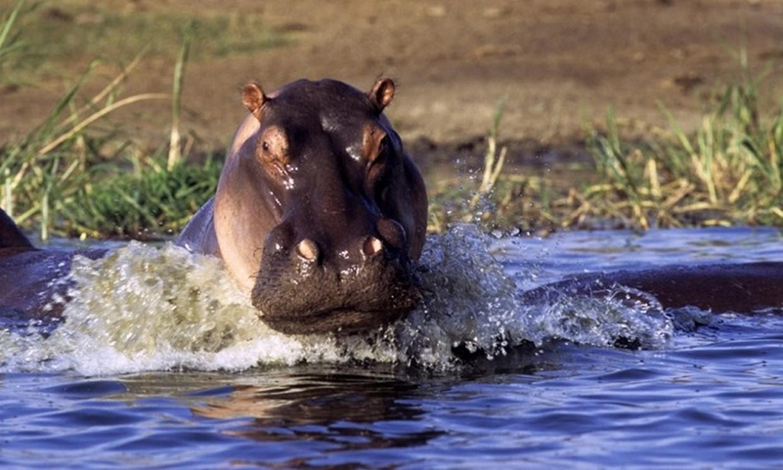 11-Day Wildlife, Gorilla and Chimpanzee Safari Tour 2