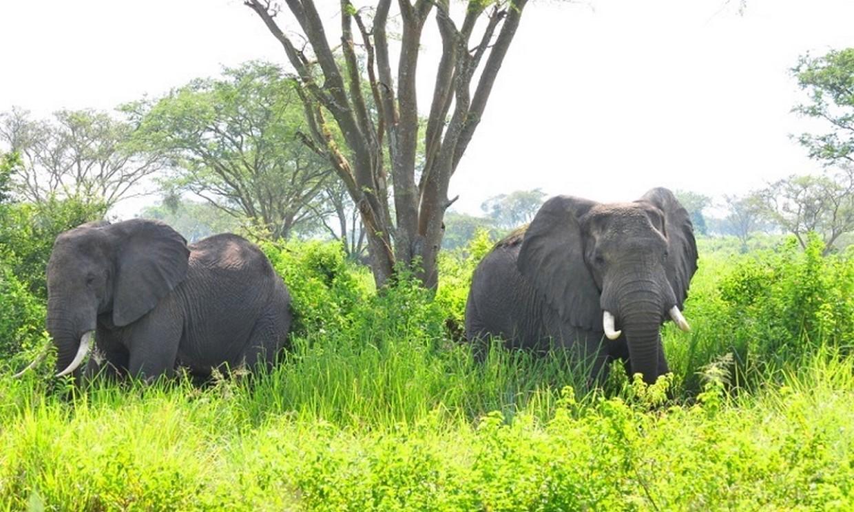 11-Day Wildlife, Gorilla and Chimpanzee Safari Tour 4