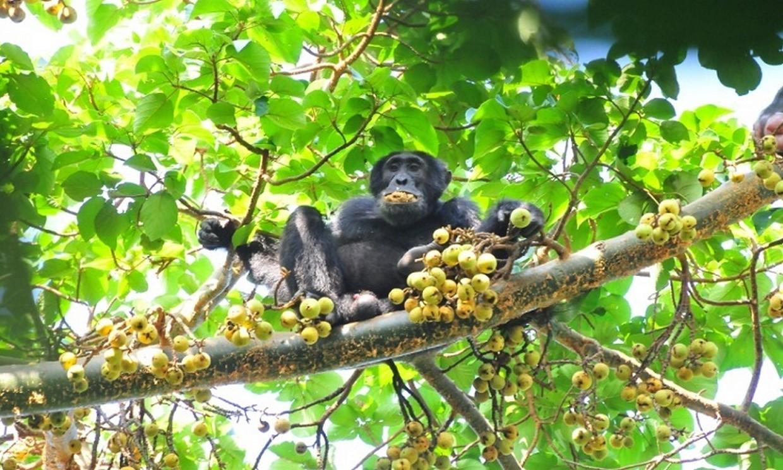 11-Day Wildlife, Gorilla and Chimpanzee Safari Tour 5