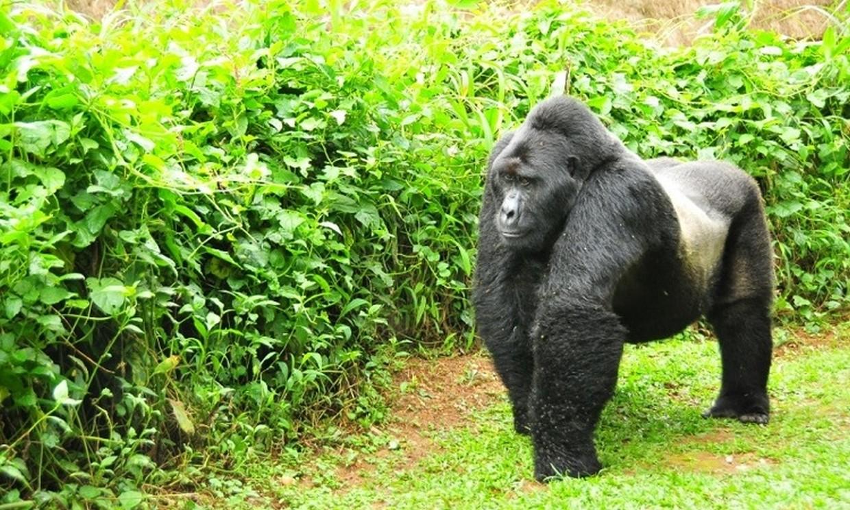 11-Day Wildlife, Gorilla and Chimpanzee Safari Tour 1