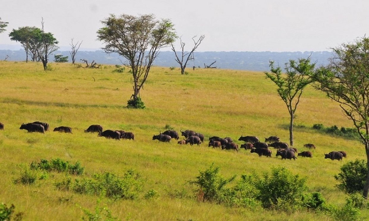 12-Day Uganda Gorillas, Chimps and Wildlife Safari 2
