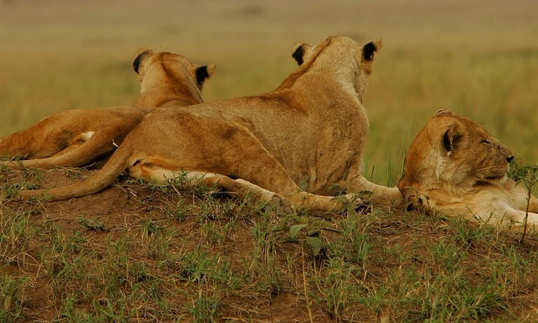 15-Day Spectacular Uganda Primates and Wildlife Safari 3