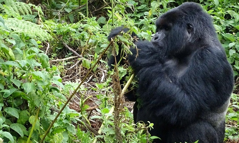 9-Day Gorillas, Chimpanzee and Wildlife Trip 3