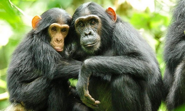 9-Day Gorillas, Chimpanzee and Wildlife Trip 2