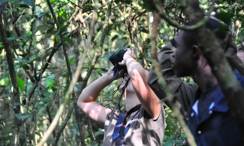 7-Day Gorilla, Chimpanzee and Wildlife Safari Tour 1