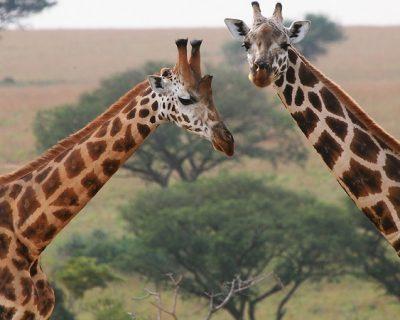 Uganda Travel Guide 6
