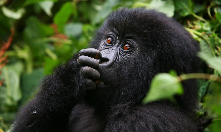 6-Day Amazing Wildlife & Gorilla Tracking Safari 3