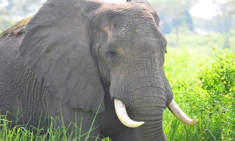 6-Day Amazing Wildlife & Gorilla Tracking Safari 4
