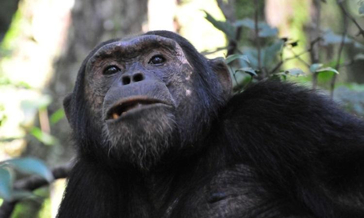 6-Day Amazing Wildlife & Gorilla Tracking Safari 5