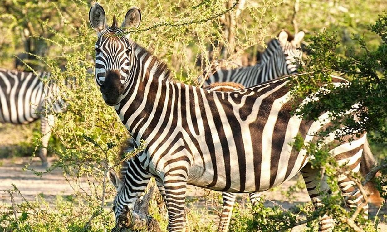 4-Day Amazing Uganda Wildlife Safari 3