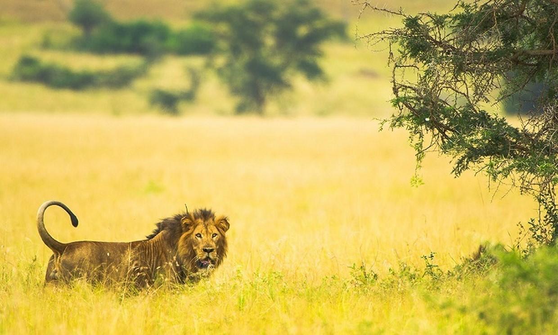 4-Day Amazing Uganda Wildlife Safari 2