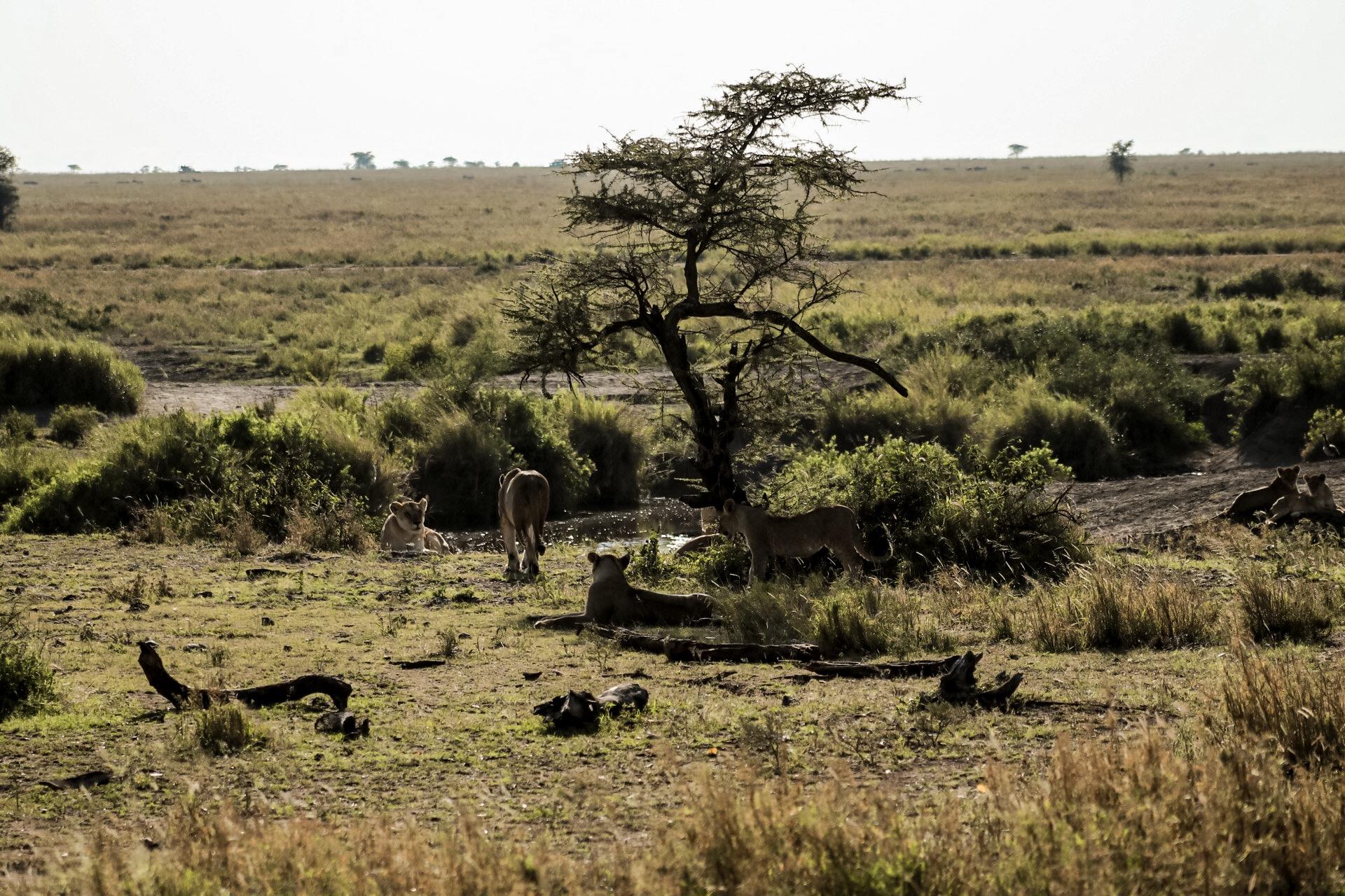 8 Days Tanzania Safari Tour 1