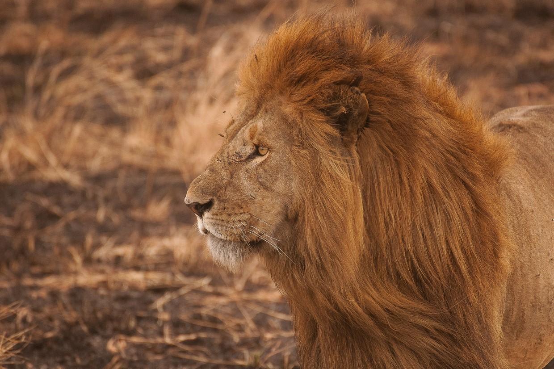 3 Days Tanzania Northern Circuit to Tarangire, Serengeti, and Ngorongoro 1