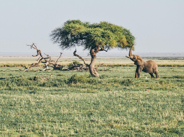 Tanzania Northern Circuit (Tarangire, Serengeti, Manyara & Ngorongoro) 10