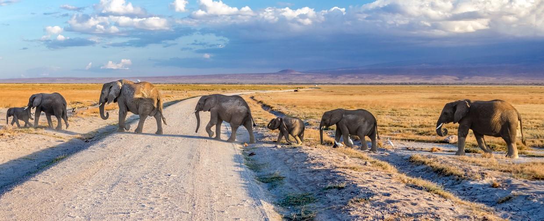 Tanzania Northern Circuit to Tarangire, Manyara and Ngorongoro 4