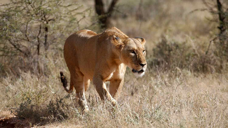 5 Days Masai Mara and Nakuru Lake Safaris 1
