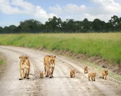 Kenya Travel Guide 1