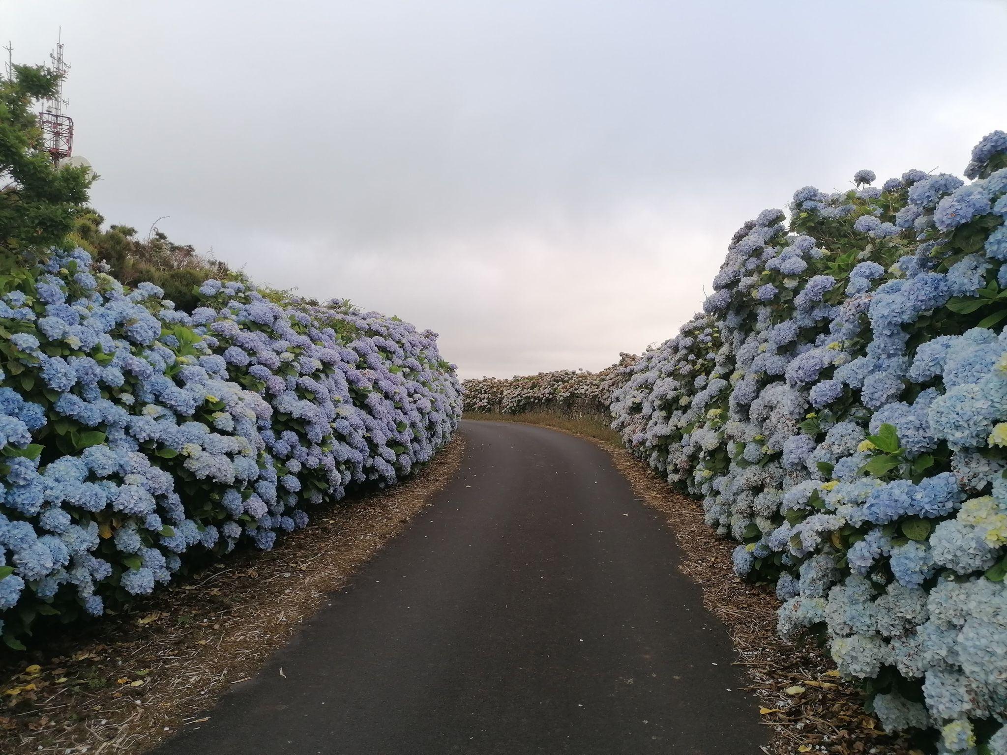 Full Day Terceira Island Van Tour 1