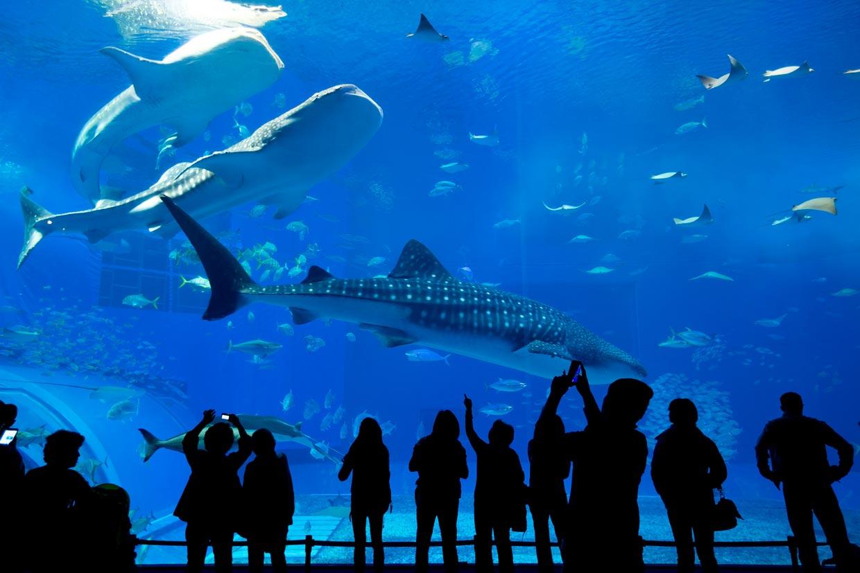 Aquarium Antalya