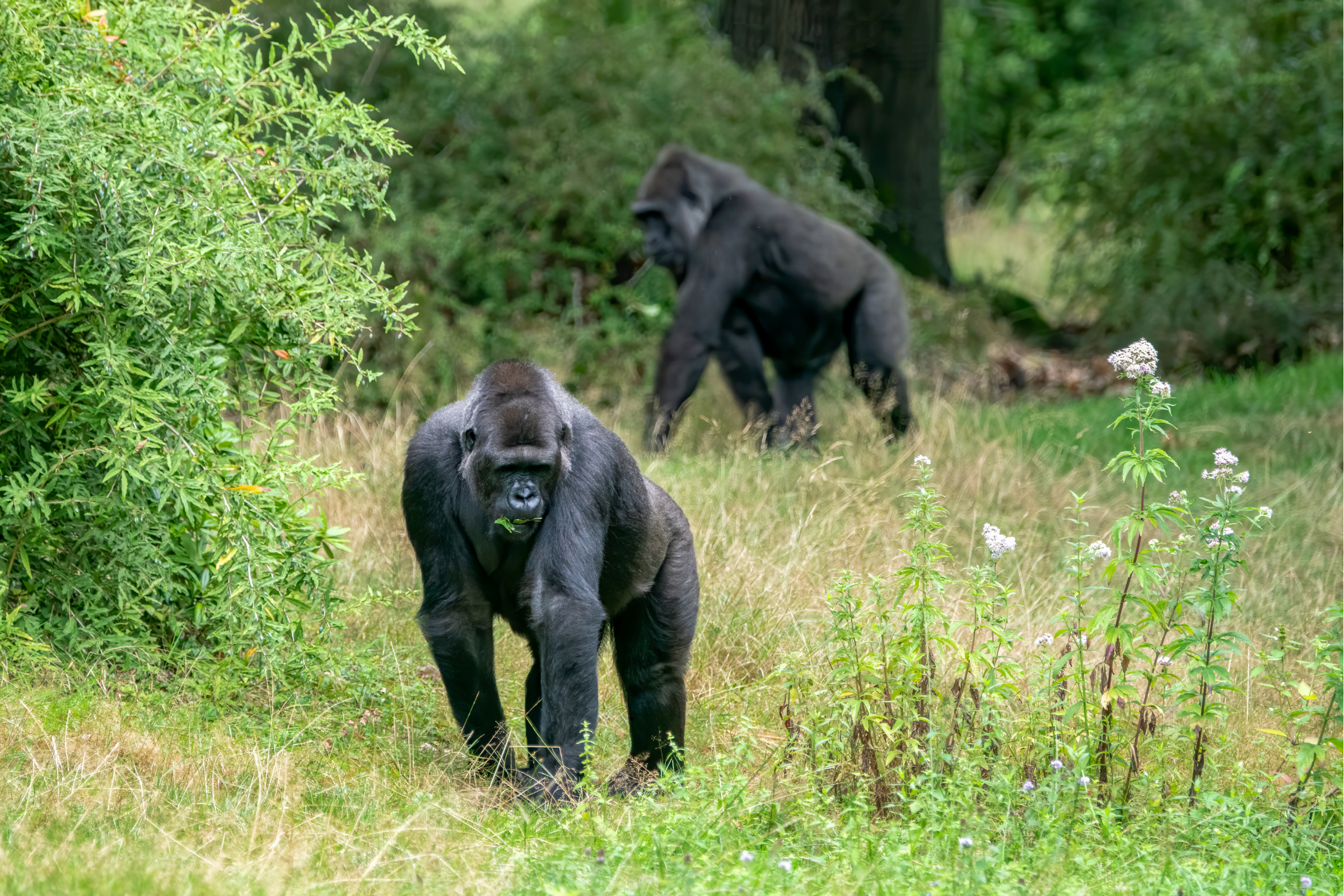 Private Safari to Bwindi Forest Gorilla Tracking in Uganda with Transportation from Kampala 8