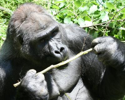 Uganda Travel Guide 4