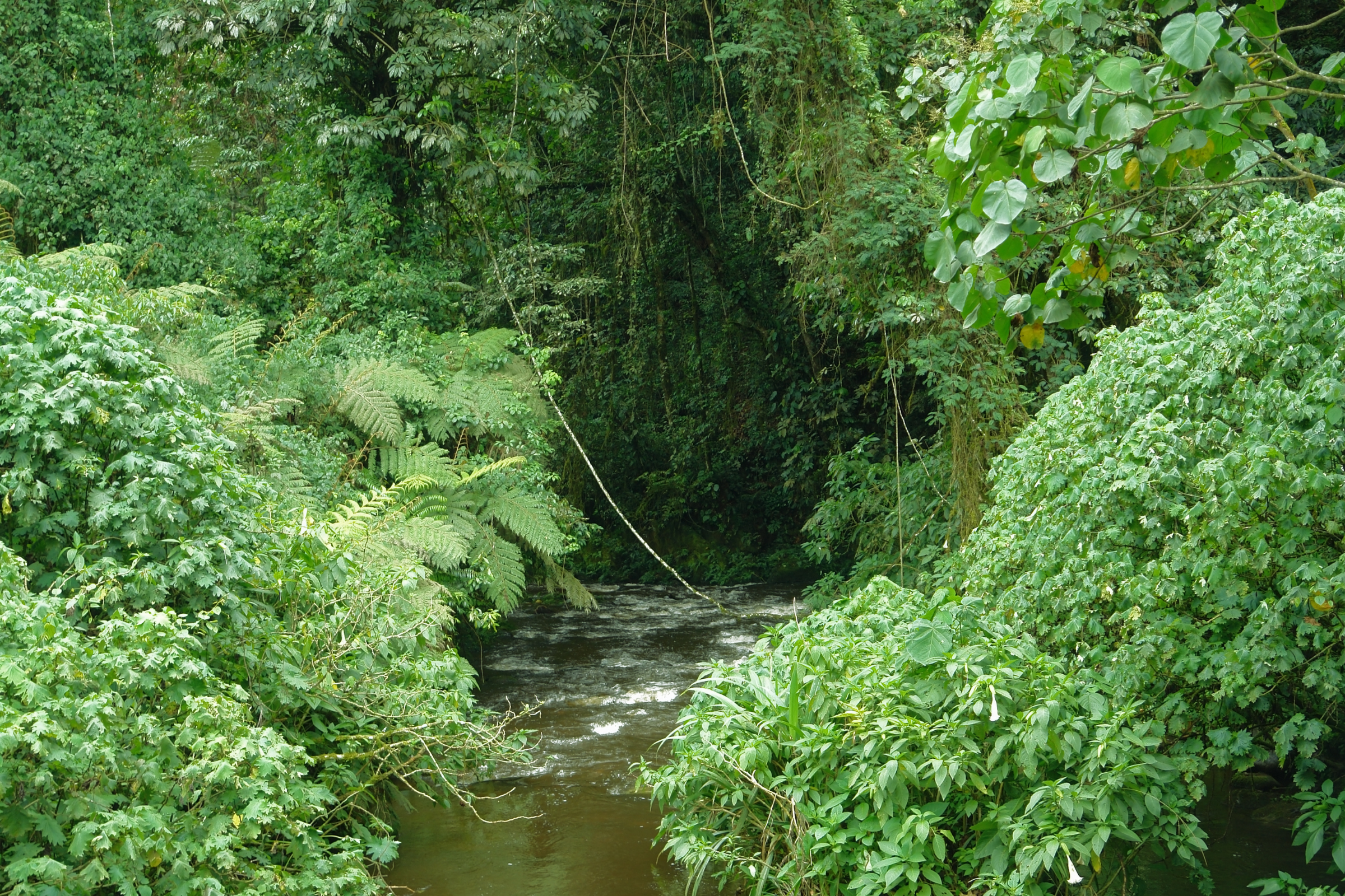 Private Safari to Bwindi Forest Gorilla Tracking in Uganda with Transportation from Kampala 5