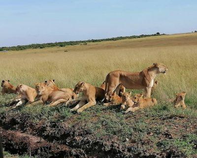 Kenya Travel Guide 2