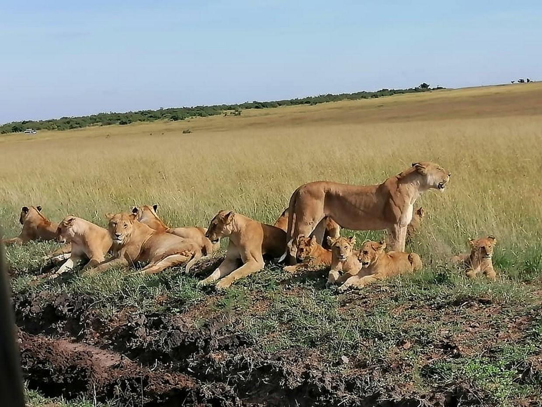 6 Days Mara, Naivasha, Amboseli Safari 1