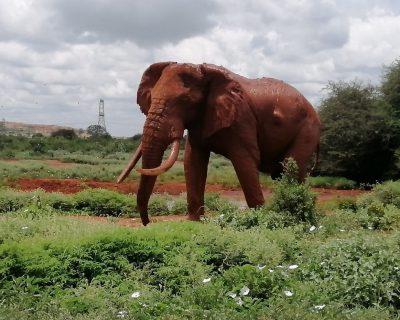Kenya Travel Guide 6