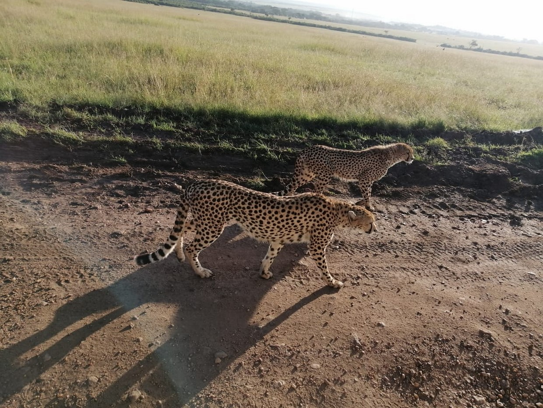 8 Days Maasai Mara - Lake Nakuru - Amboseli - Tsavo West - Tsavo East 1