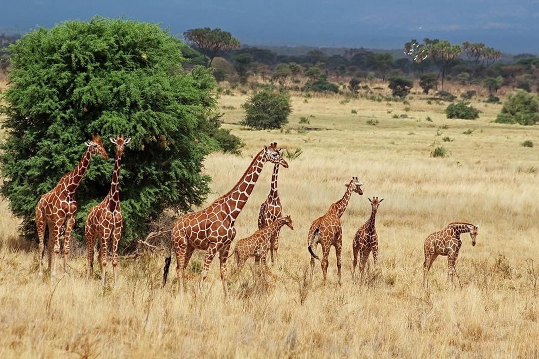 8 Days Cheetah Safari in Kenya 5