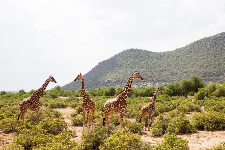 5 Days Masai Mara Migration Safari 1