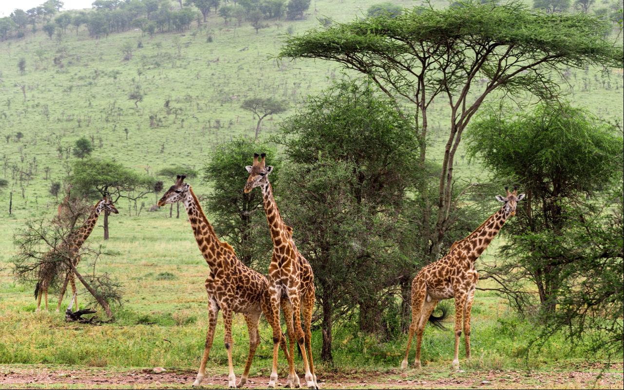 3 Days Kidepo Valley Wildlife Adventure 8