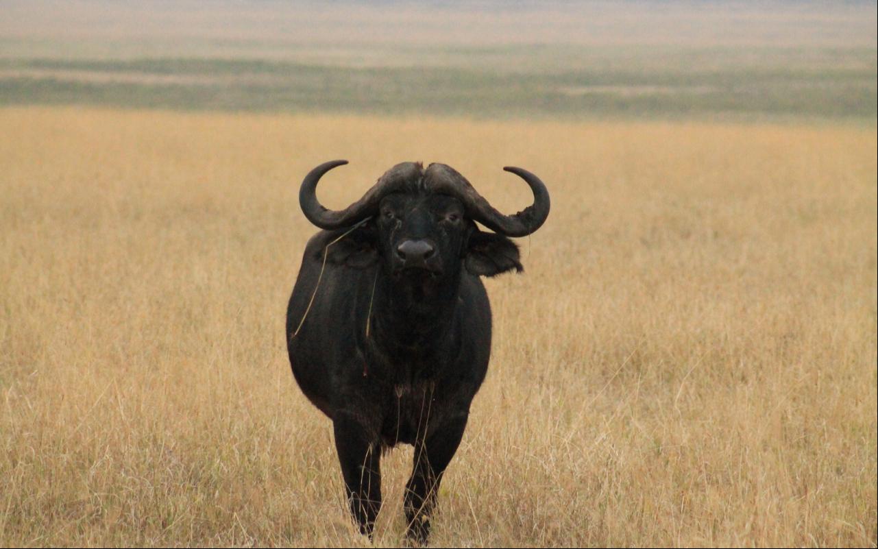 3 Days Kidepo Valley Wildlife Adventure 6