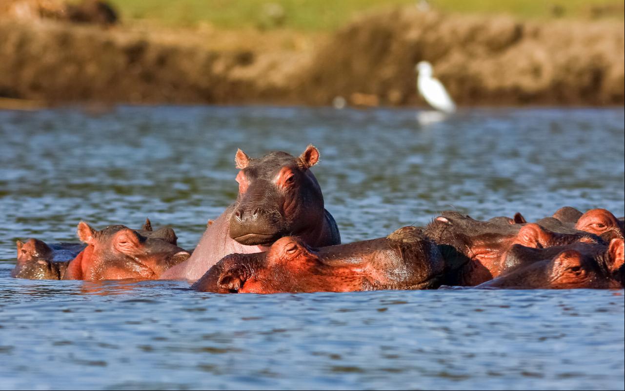 Uganda Primates and Wildlife Safari to Bwindi and Queen Elizabeth National Park 6
