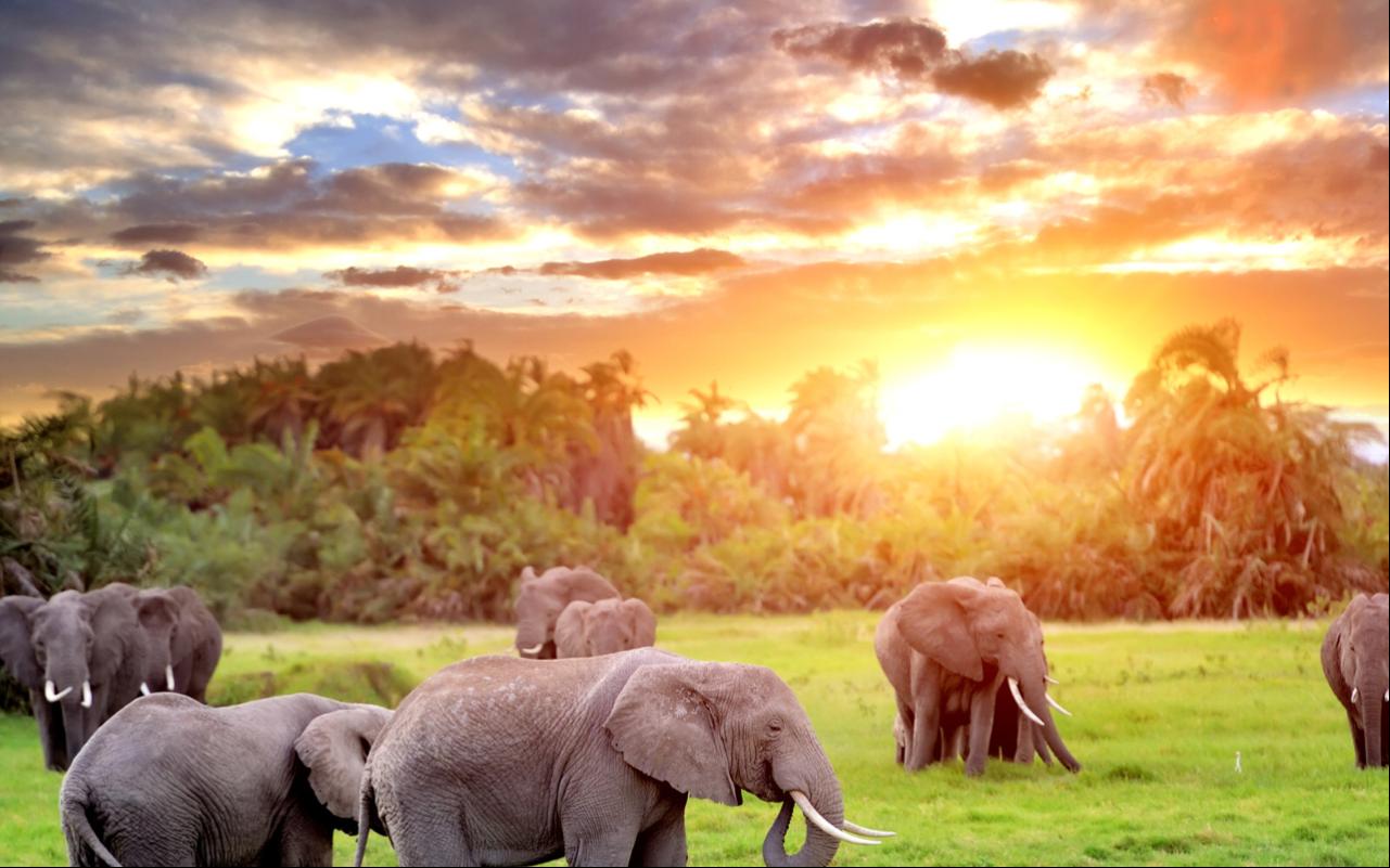 Uganda Primates and Wildlife Safari to Bwindi and Queen Elizabeth National Park 3