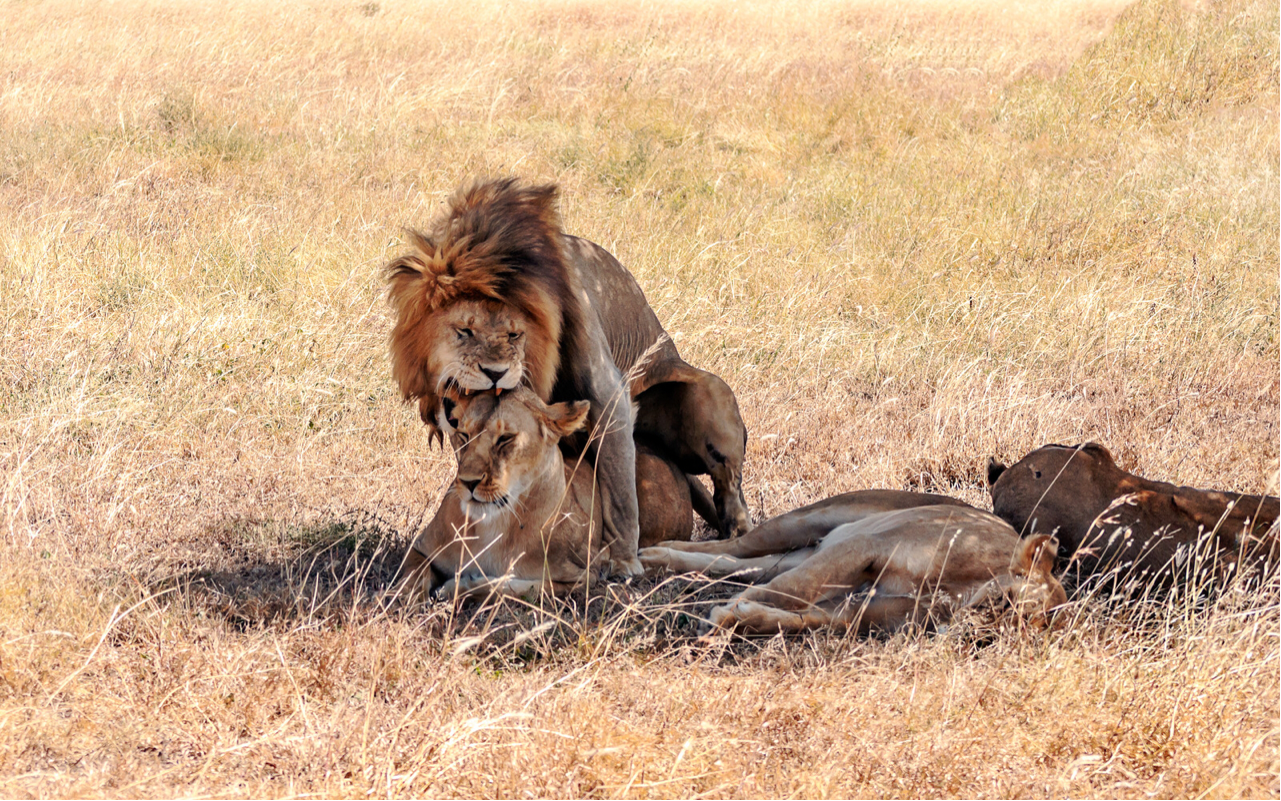 Uganda Primates and Wildlife Safari to Bwindi and Queen Elizabeth National Park 2