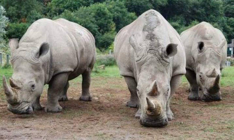 Rhino Tracking Tour in Ziwa Rhino Sanctuary 2
