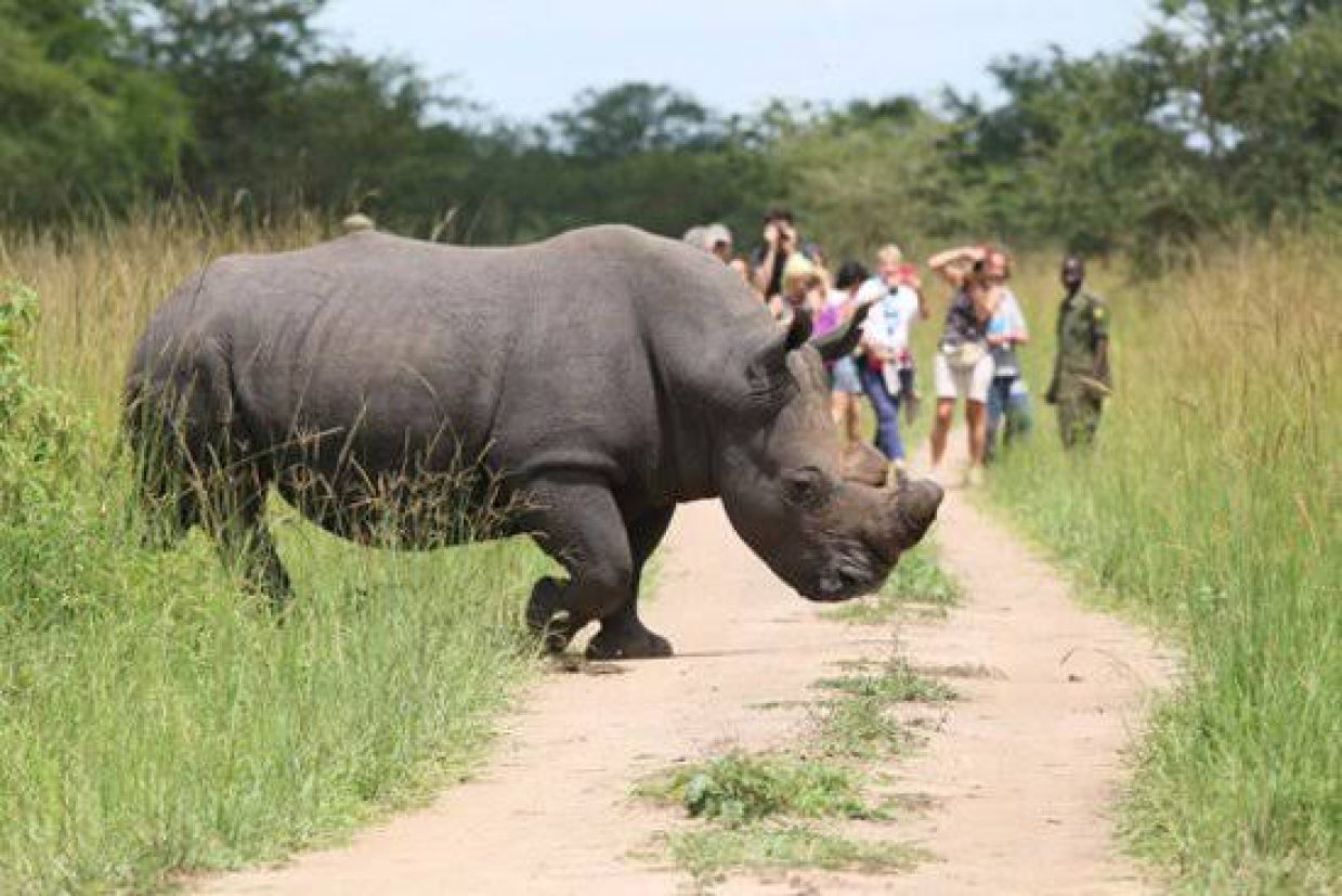 Rhino Tracking Tour in Ziwa Rhino Sanctuary 1