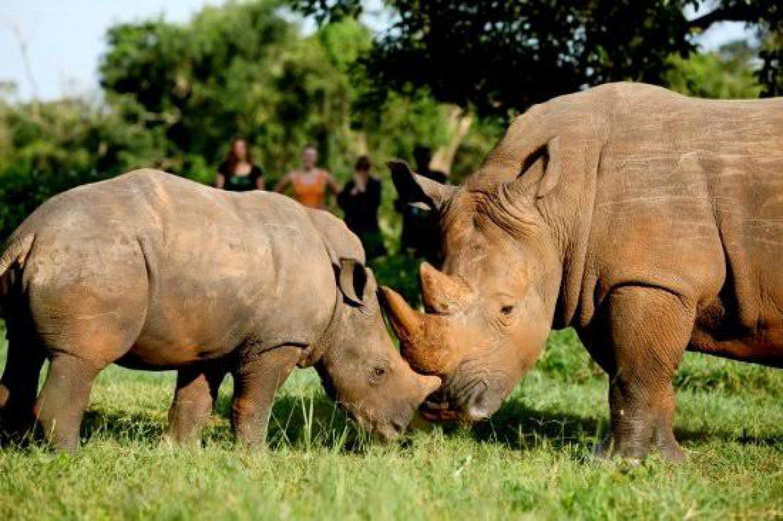 Rhino Tracking Tour in Ziwa Rhino Sanctuary 3