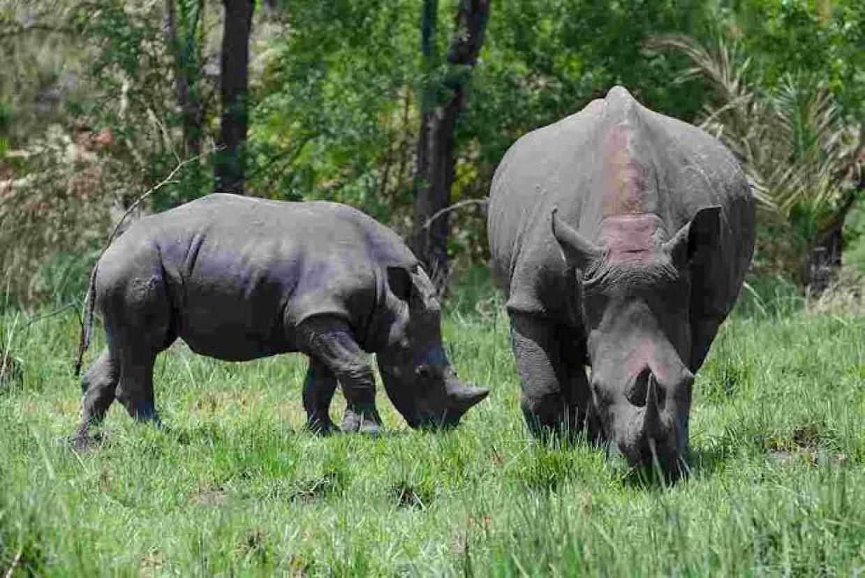 Rhino Tracking Tour in Ziwa Rhino Sanctuary 8