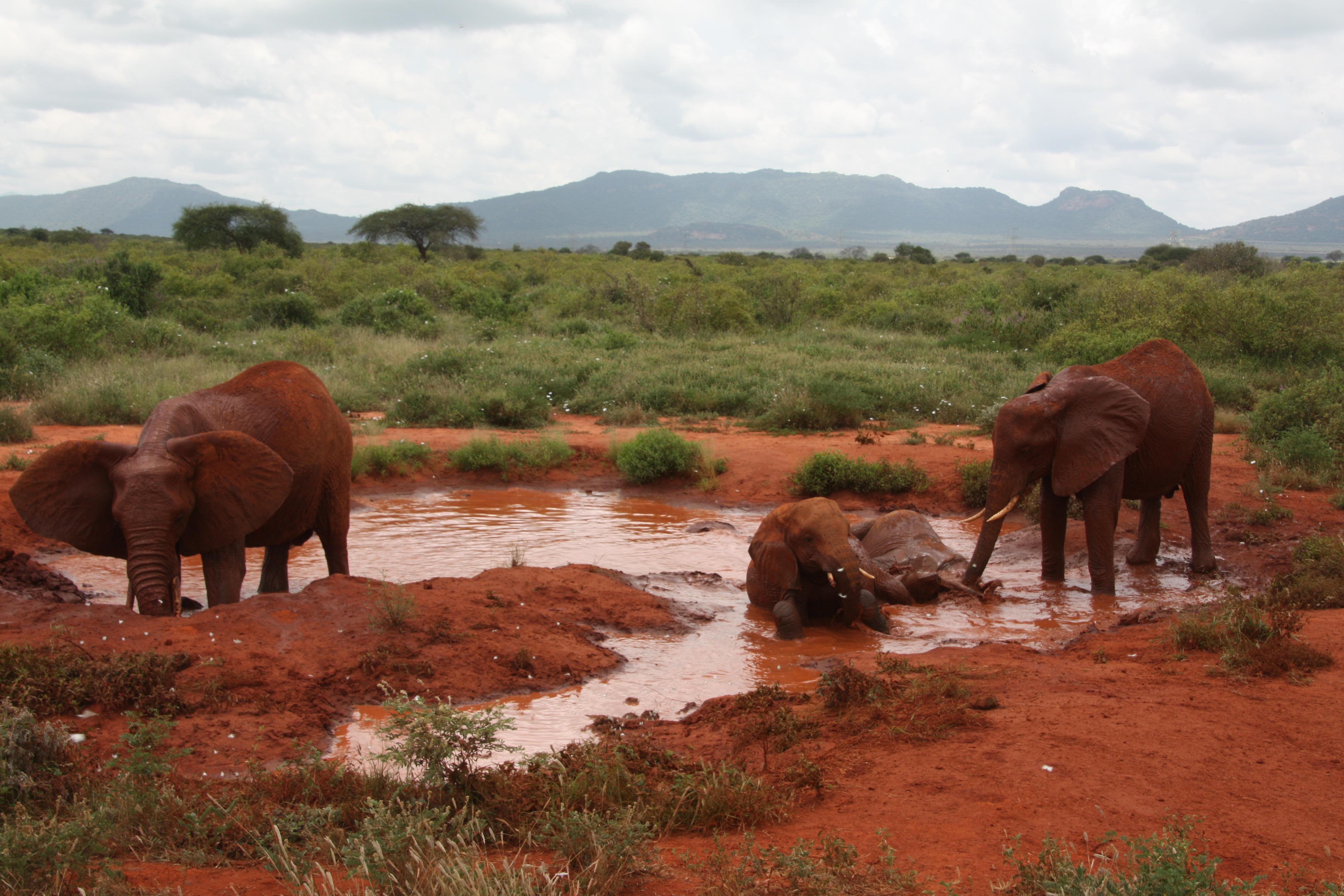 8 Days Maasai Mara - Lake Nakuru - Amboseli - Tsavo West - Tsavo East 2