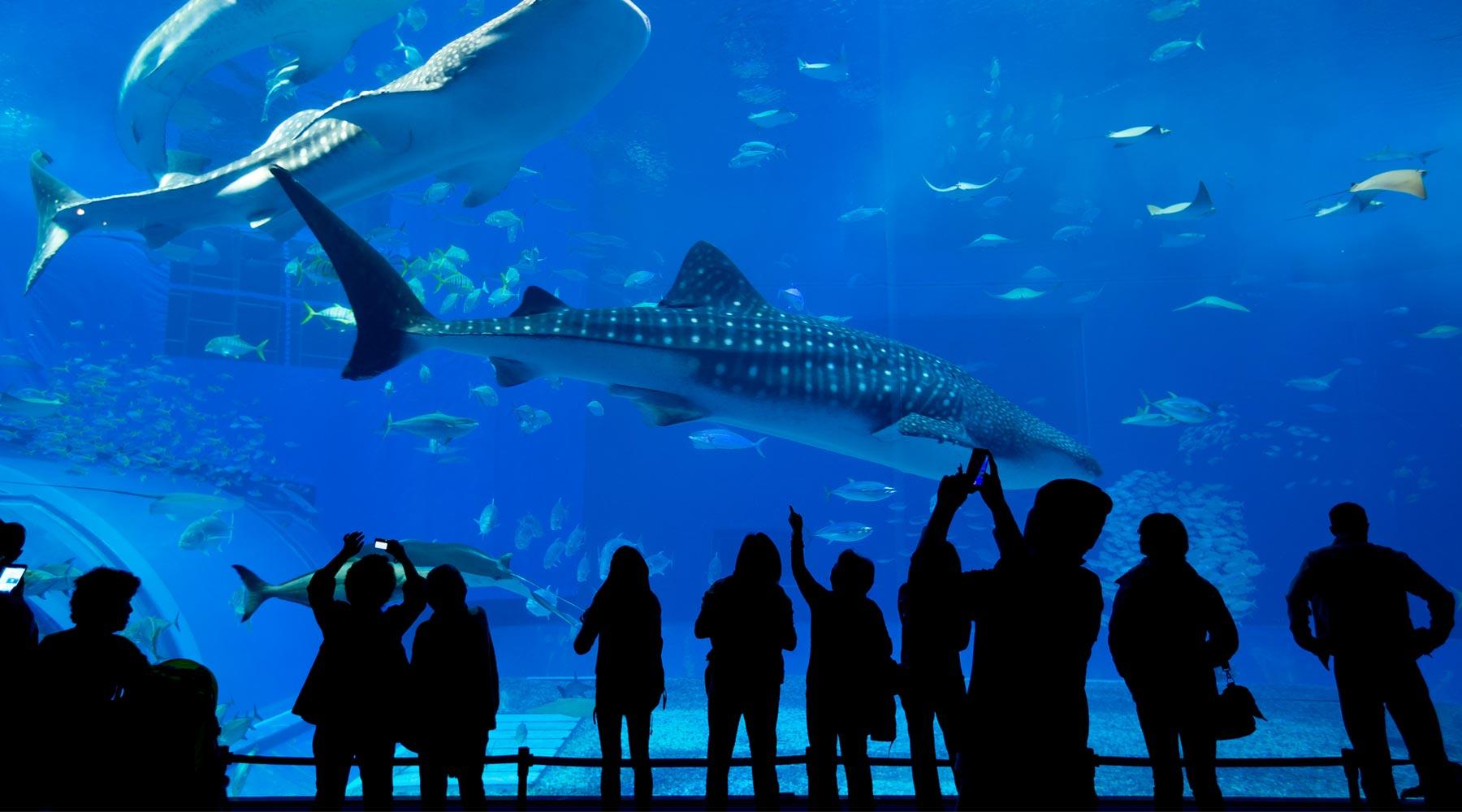 Istanbul Aquarium – The Most Famous Aquarium in Turkey