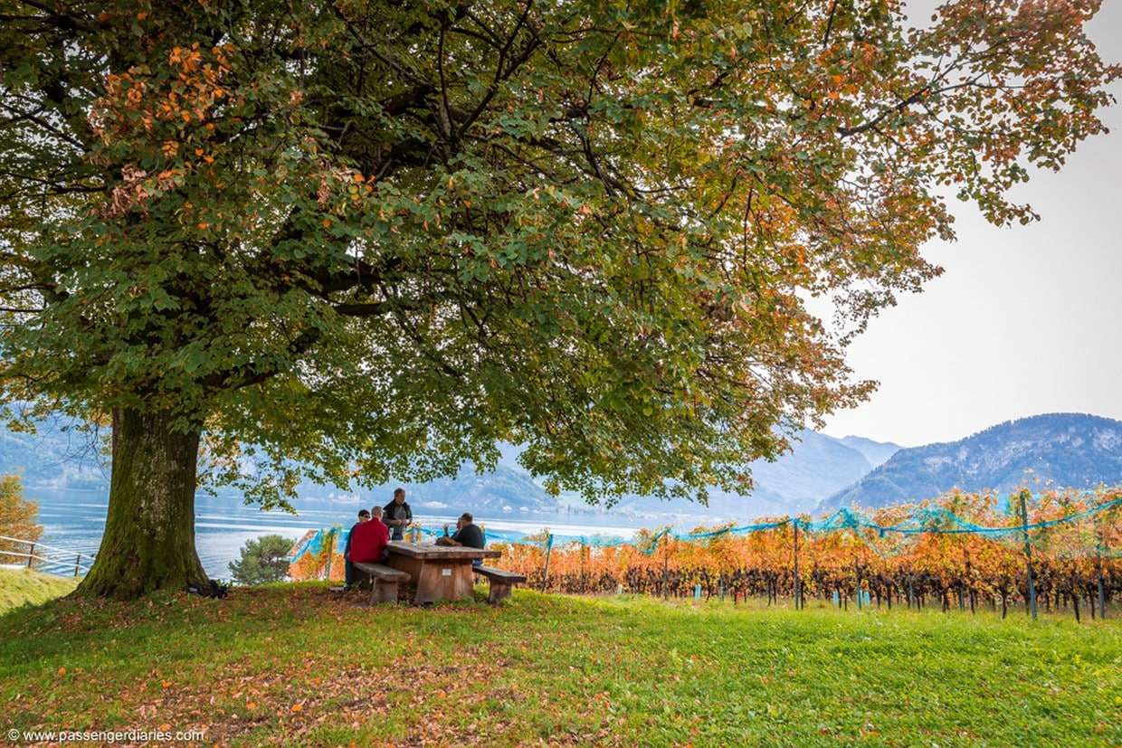 Lucerne Wine Tasting Tour by Lake Lucerne in a Traditional Winery 2