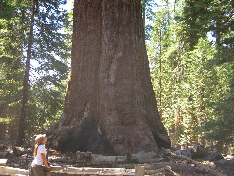 11 Days Yellowstone and California Tour 9