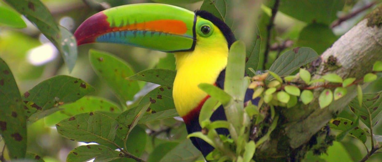 Naturally Costa Rica 3
